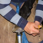 /ext/galleries/cornell-farrier-conf/full/719_Cornell_JC_1115.jpg
