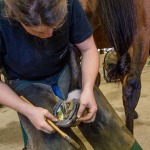 /ext/galleries/farriers-at-work-bob-pethick/full/179_Bob_Pethick-_JM_0717.jpg