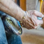 /ext/galleries/farriers-at-work-bob-pethick/full/598_Bob_Pethick-_JM_0717.jpg