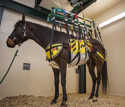 WCVM equine robotic lift