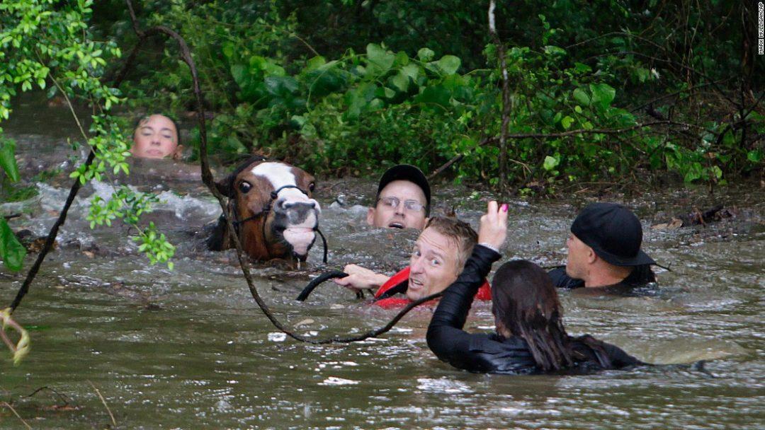 Justin Nelzen saves horses from flooding near Houston, Texas, on April 18, 2016.