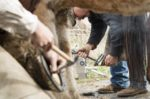 Montana State University seeks farrier instructors