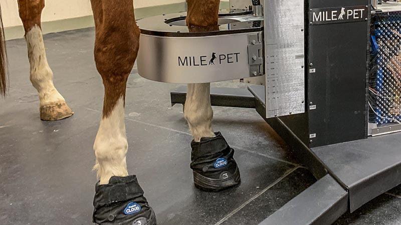 UC Davis PET scanner