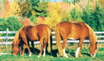 Horses-Grazing.jpg