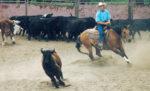 Cutting-Horses-1.jpg
