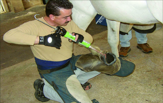 Using Silicone for Better Hoof Care