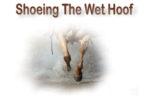 Shoeing the Wet Hoof