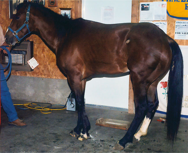 an overview of laminitis a serious problem in horses