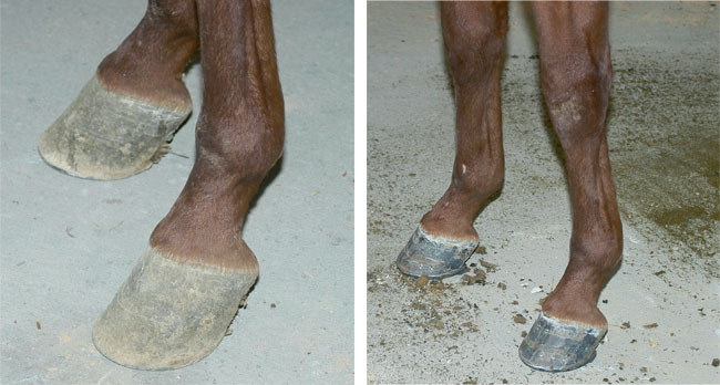 Shoeing Horses With Low Heels