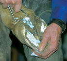 copper sulfate for hoof with thrush