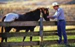 Backyard-Horse-Caption-1.jpg