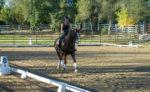 Sport-Horse_DSC_0255.jpg