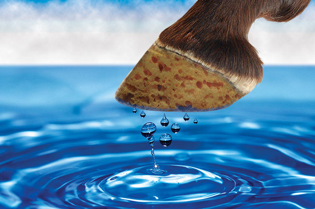 The Mystery Of Moisture And The Equine Foot