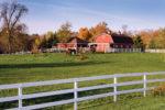 Horses_Farm_Scenic.jpg