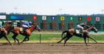 iStock_000002168858Large_horseracing.jpg