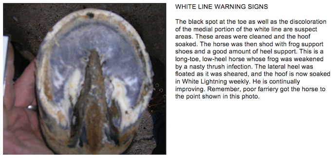 Preventing And Treating White Line Disease American