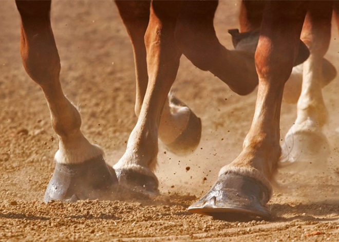 Heel Concussion Can Pound A Hoof