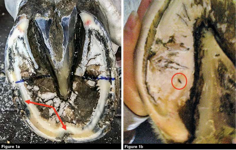 How To Treat Hoof Abscesses | American Farriers Journal