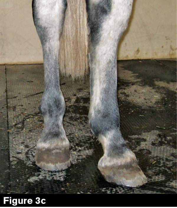 Your Number 1 Job: Balance the Horse | American Farriers Journal