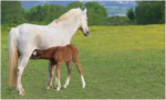 Grass Foot Foal