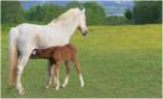 Grass Foot Foal