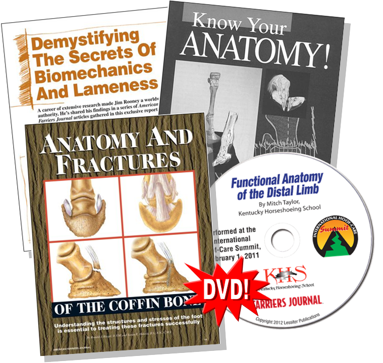 Anatomy Package 2