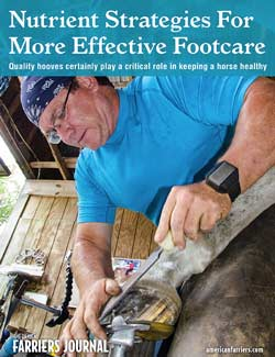 Nutrient Strategies For More Effective Footcare