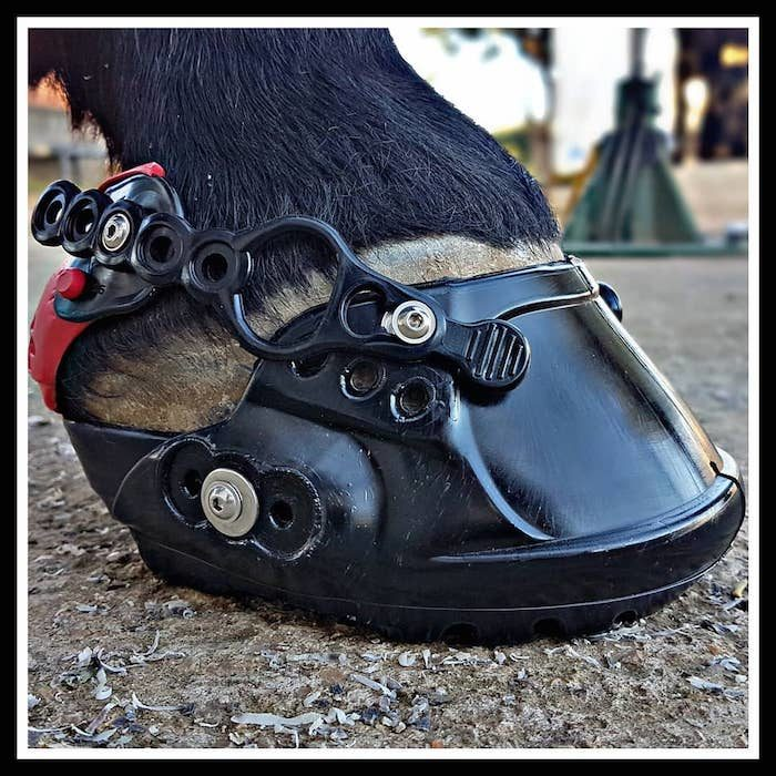 Terra Horse EVO Boots_0220 copy