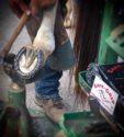 Safe-Grip Horseshoes Barrel Horseshoe_0320 copy