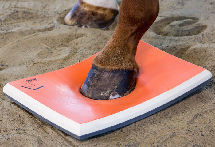 Murdoch Method Sure Foot Equine Physiopad_1218 copy