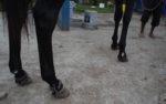 horse kicking rings
