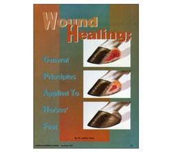 Wound Healing: General Principles Applied To Horses' Feet